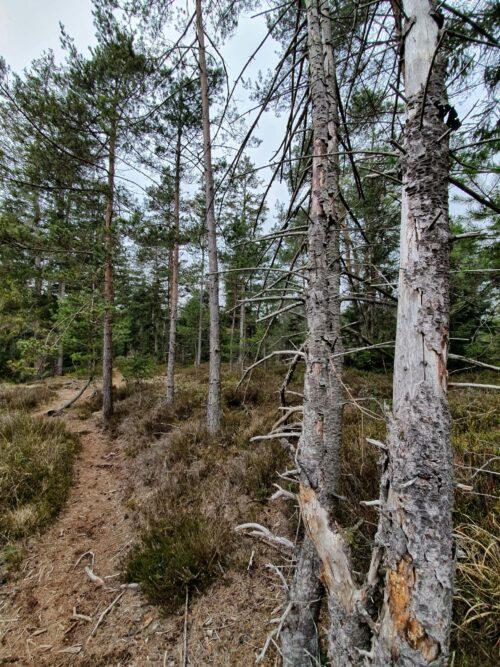 Wald Baum FIlze