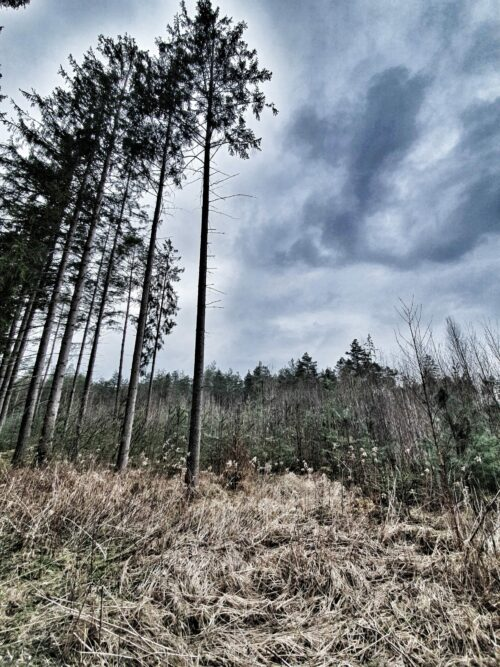 Wald Filze